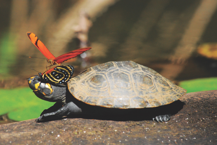 Turtle and Butterfly in Amazon Rainforest