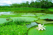 Amazon River Tour - contemplate the rich biodiversity