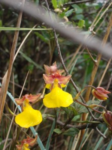 5_inca_trail_to_machu_picchu_orchids-copia
