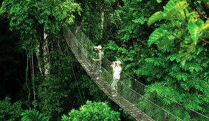 03inkaterra-travel-peru-amazon-canopy-low