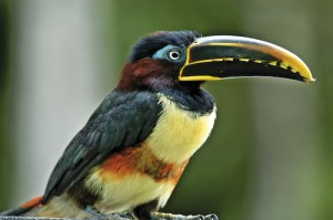 Amazon River Tour - Bird 3